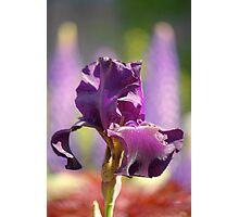 a garden's royalty... Photographic Print