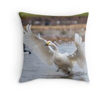 Wild Bewicks swan about to land Throw Pillow