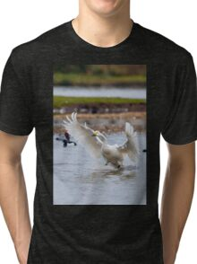 Wild Bewick's swan about to land Tri-blend T-Shirt