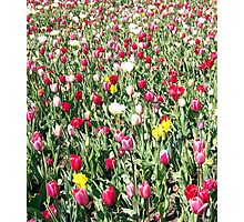 Flowers 0661b Photographic Print