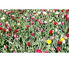 Flowers 0663 Photographic Print