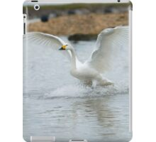 Bewick's swan about to land on water with wings outspread iPad Case/Skin