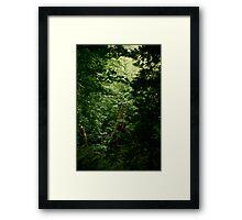 Rainforest on Vancouver Island Framed Print
