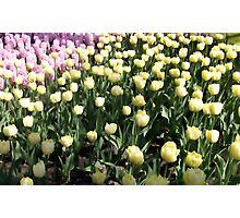 Flowers 0670 Photographic Print