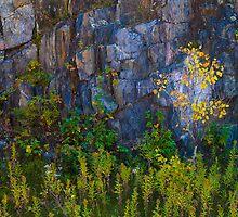 Leaves on Rock by Neil Speers