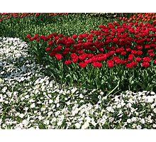 Flowers 0673 Photographic Print