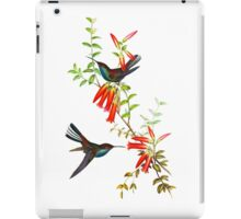 White-tailed Hillstar Hummingbirds iPad Case/Skin