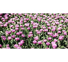 Flowers 0676 Photographic Print
