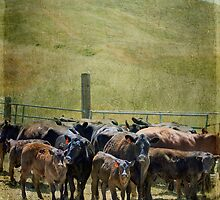 When the Cows Wanna Go Home by Laura Palazzolo
