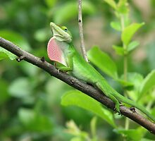 Look at Me - Anole by JeffeeArt4u