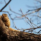 Squirel is just a rat with cuter outfit by Digvijay Sharma