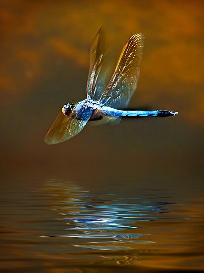Dragon Fly In Flight by Julienne  Bowser