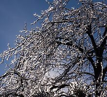Sparkling Icy Tree - Mother Nature's Decoration by Georgia Mizuleva