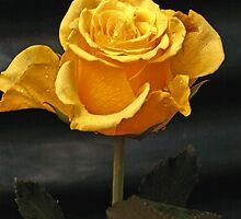 Grey yellow. by Baska