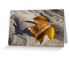 Tulip Tree Leaf - Shadow and Light Greeting Card