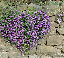 Heart-Shaped Flowers on Yorkshire Stone Wall by Ann Miller