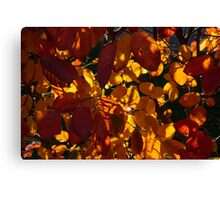 Bold and Colourful - Take 3 Canvas Print