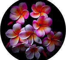 Plumeria Blossoms by WienArtist