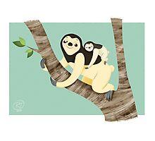 Sloth&baby  Photographic Print