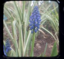 TTV Blue Flower by Daniel James