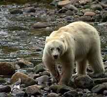 spirit bear - british columbia by KaPaphotography