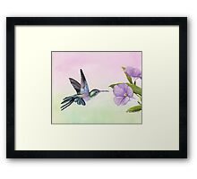 Hummingbird at Morning Glory Framed Print