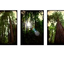 Muir Woods by Mark Moskvitch