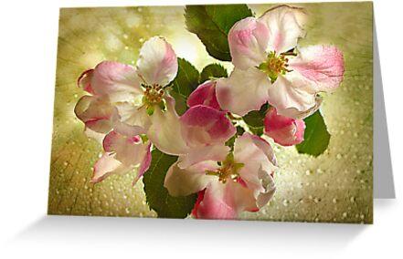 Apple Blossom by Danuta Antas
