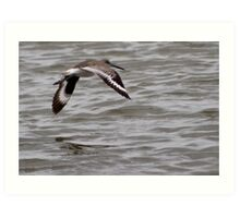 A Flying Willet Art Print