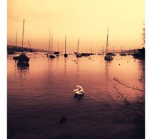 Swan Song Photographic Print