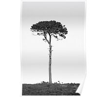 Nature in black and white Poster