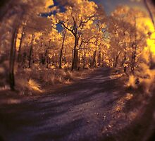 'Bent Forest', ISO1600 IR by BigAndRed