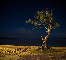 The Tree - Lake Cootharaba by liming tieu