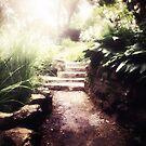 towards the light by Angel Warda