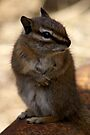 I Promise ... I Didn't Take Your Nut .. by Betsy  Seeton