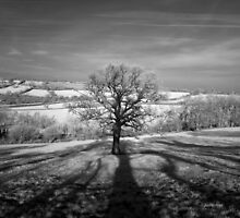 Lone tree over the East Somerset Railway by JonDelorme