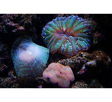 Sea Enemies Photographic Print