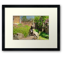 The Terrier at Home.. Framed Print
