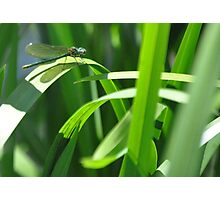 an insect of beauty  Photographic Print