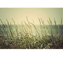 Nature Photographic Print