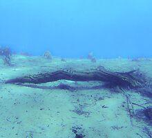 underwater twig by BreatheLife DiveWear