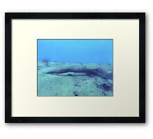underwater twig Framed Print