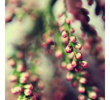 Reminiscence Photographic Print