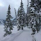 Winter Walk by Darcy Overland