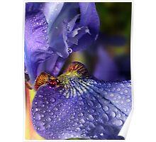 Iris Droplets ! Poster