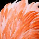 Orange Feathers by ZeeZeeshots