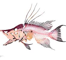 Hogfish by helterskeletons