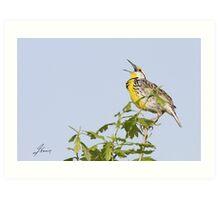 The Eastern Meadowlark Belt Art Print