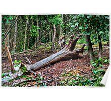 Fallen Tree, Aga Fenn Suffolk Poster