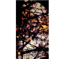 Autumn I Photographic Print